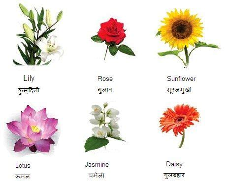 Short essay on flower in hindi